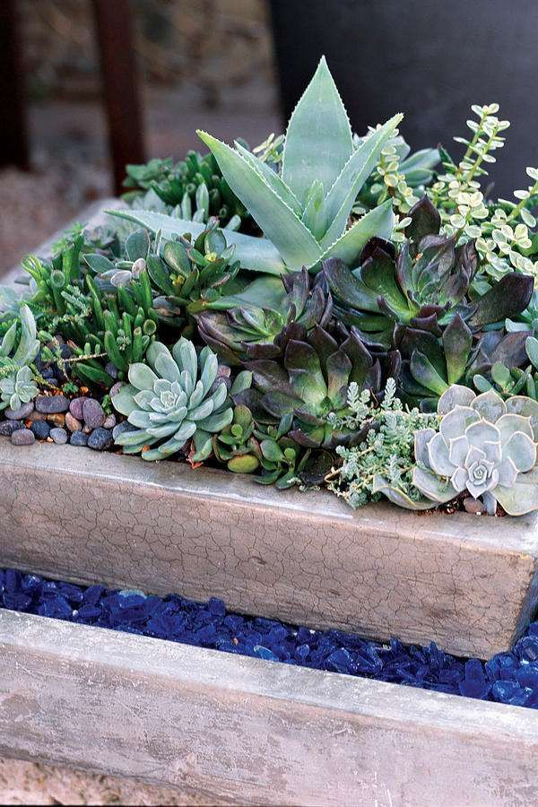 A living arrangement of succulents demands little care and will last for years. The color of these c... - By the Editors of Southern Living