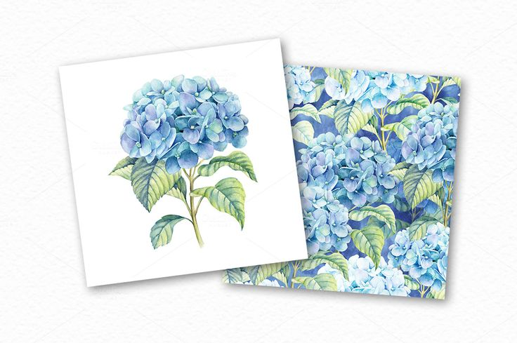 Watercolor blue hydrangea by colibri on @creativemarket