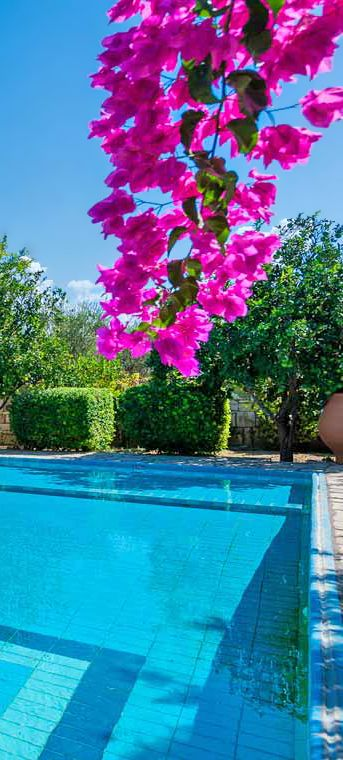 HERE IS THE OTHER END OF THE POOL. LOVELY ENVIRONMENT.Villas Mamel in Sfakaki, Rethymno, Crete