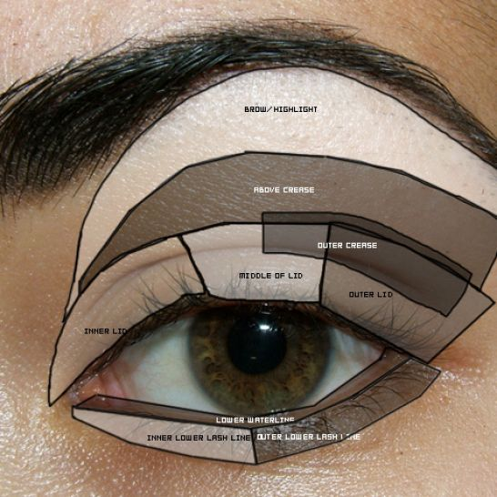 How to put on eyeshadow diagram