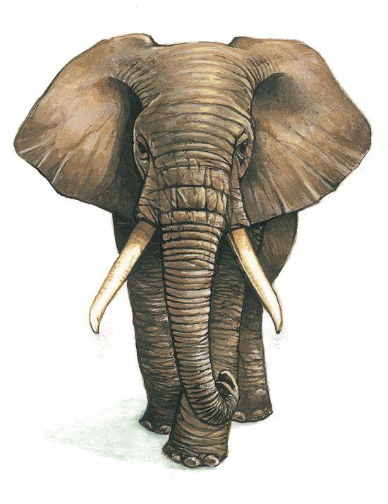 Résultats de recherche d'images pour «peinture elephant»
