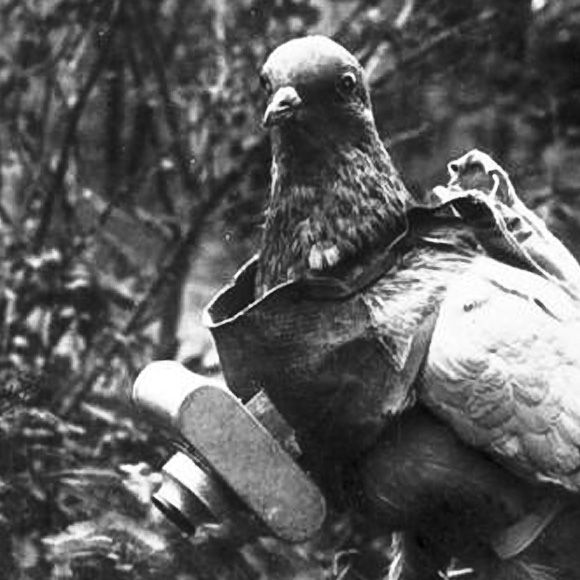 1914 - a carrier pigeon wears the miniature pigeon camera invented by Julius Neubronner. Pigeons were sometimes used during WWI to take aerial reconnaissance photographs.