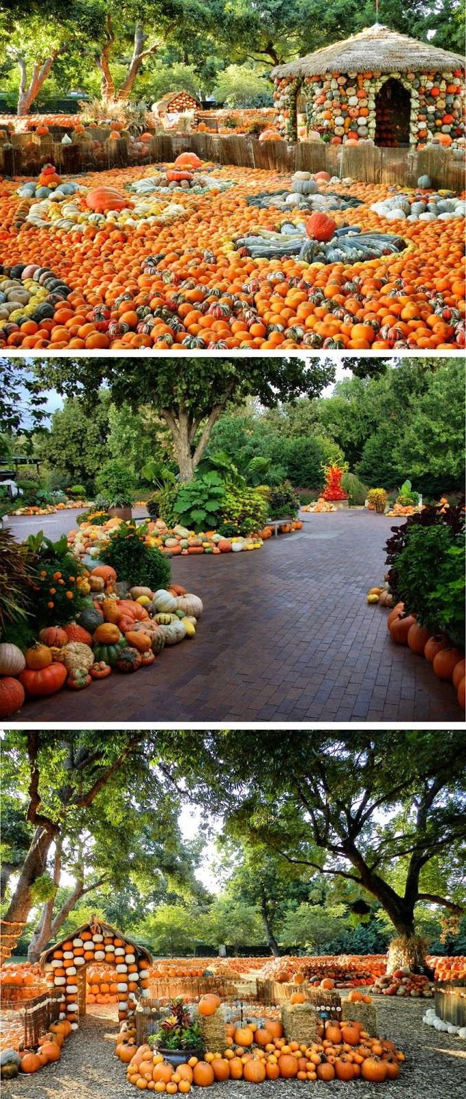 Sports And Stuff: Dallas Arboretum Autumn Display