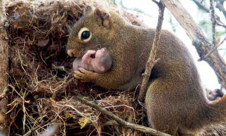 Mama squirrel with baby:  http://squirrelsofwisdom.blogspot.ca