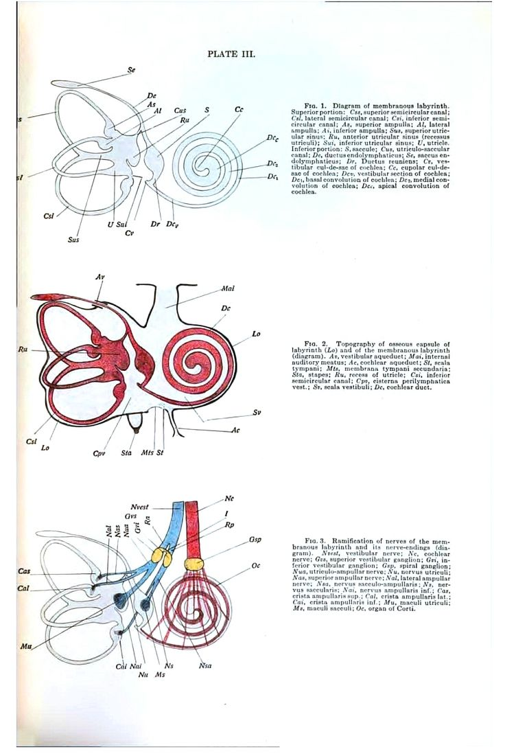 41 best The Anatomy of the Senses images on Pinterest | Anatomy ...