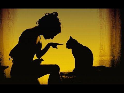 Реальные Коты - Смешные Фотографии Дворовых Кошачьих Банд