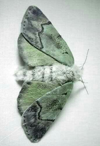 Lovely lunar #moth ~ETS | Insect art, Textile sculpture, Moth