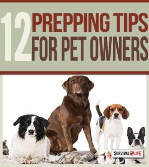 Survival Tips: Prepping with Pets   Smart Survival Planning & Emergency Preparedness Guide For Your Pets When SHTF By Survival Life http://survivallife.com/2015/02/23/survival-tips-prepping-with-pets/
