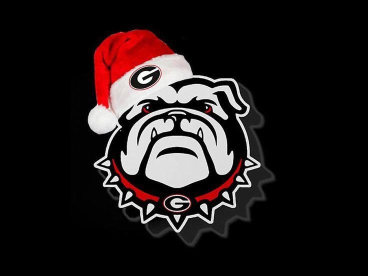 216 Best Bulldog Images On Pinterest English Bulldogs