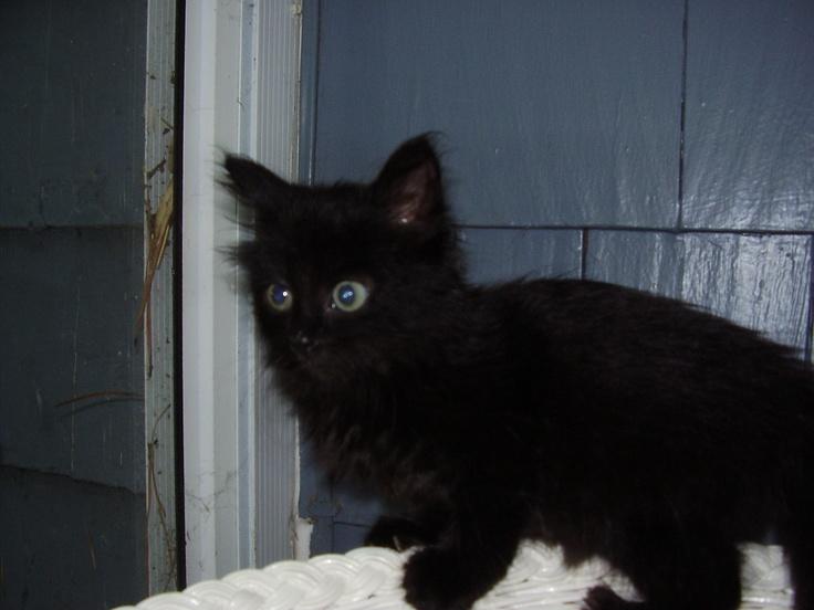 Wild Baby Black Cat | Cats: Black Cats | Pinterest