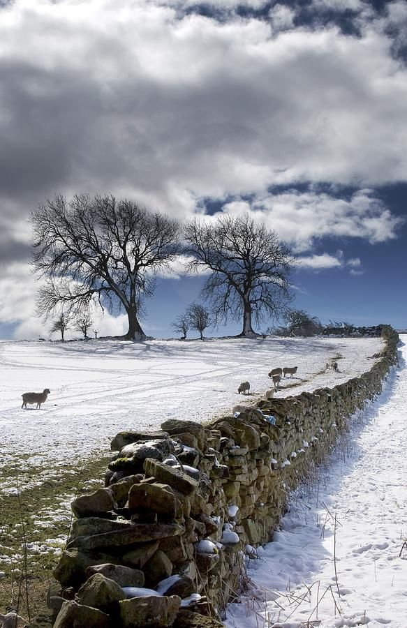 Stone Fence, Weardale, County Durham Photography by John Short