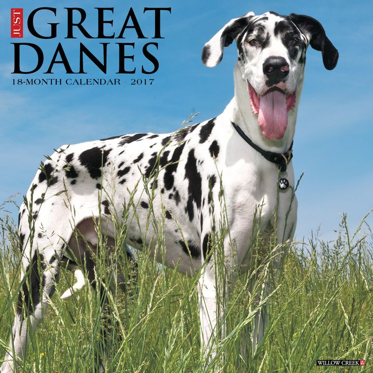 Just Great Danes 2017 Calendar - will ship in July 2016