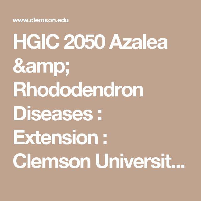 HGIC 2050 Azalea & Rhododendron Diseases   : Extension : Clemson University : South Carolina