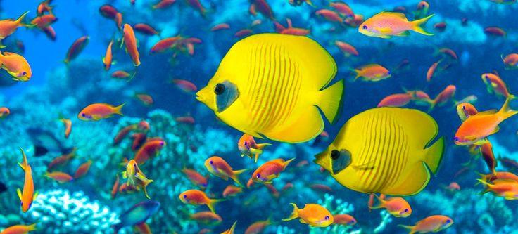Are you sure you know all about fish? Read this:  https://www.factretriever.com/fun-fish-facts     #reefbasics #meerwasseraquarium #reefaquarium  #saltwatertank
