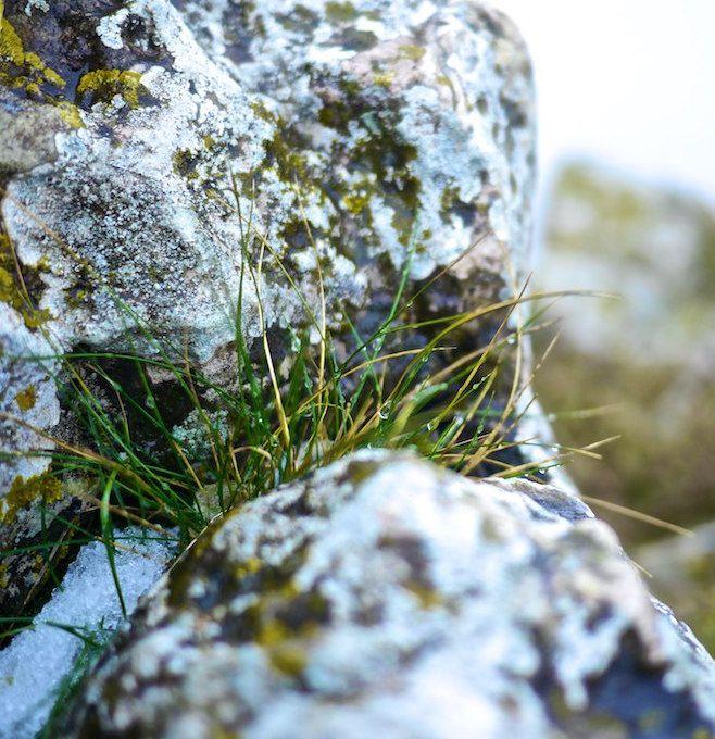Retour aux sources au sommet du Mont Brouilly et reconnexion à la #nature #mountain #hiking #Beaujolais #France