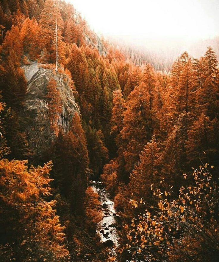 Pin By Foxhipfashion On Autumn Autumn Landscape Landscape Nature
