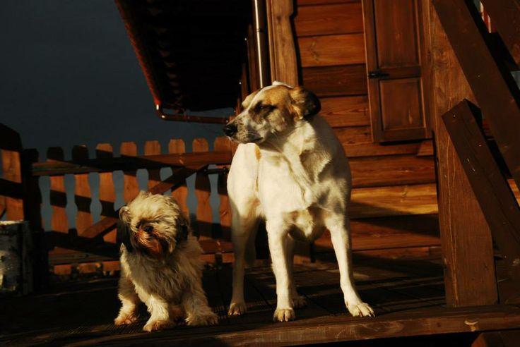 Walenty and Sonia vs wind in Kiermusy :-)