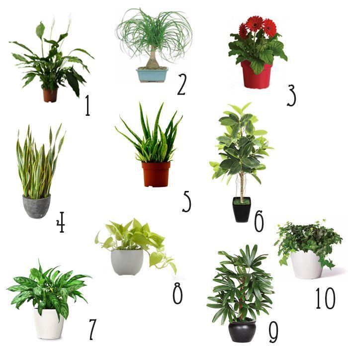 10 Best Indoor Plants For Earth Day Beyond Best Indoor 400 x 300