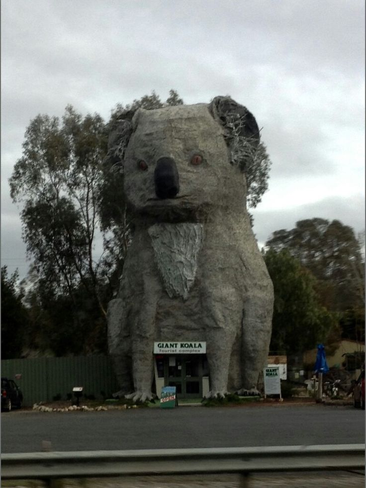 While traveling we saw a giant koala in the middle of no where