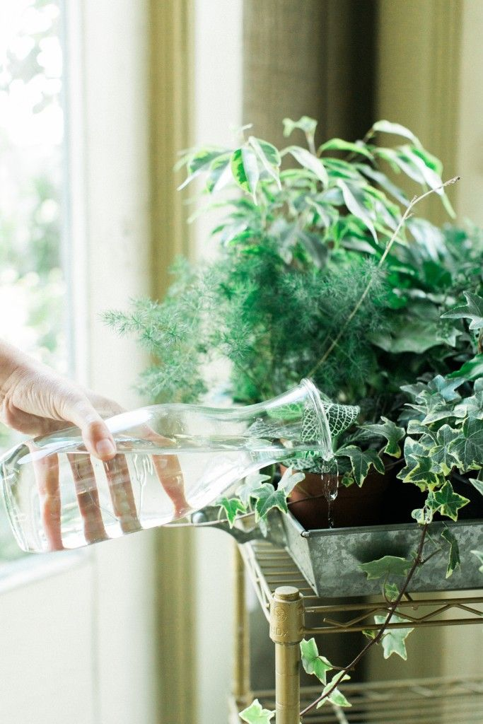 How to Keep Your Plants Alive: Tips for Watering Indoor Plants