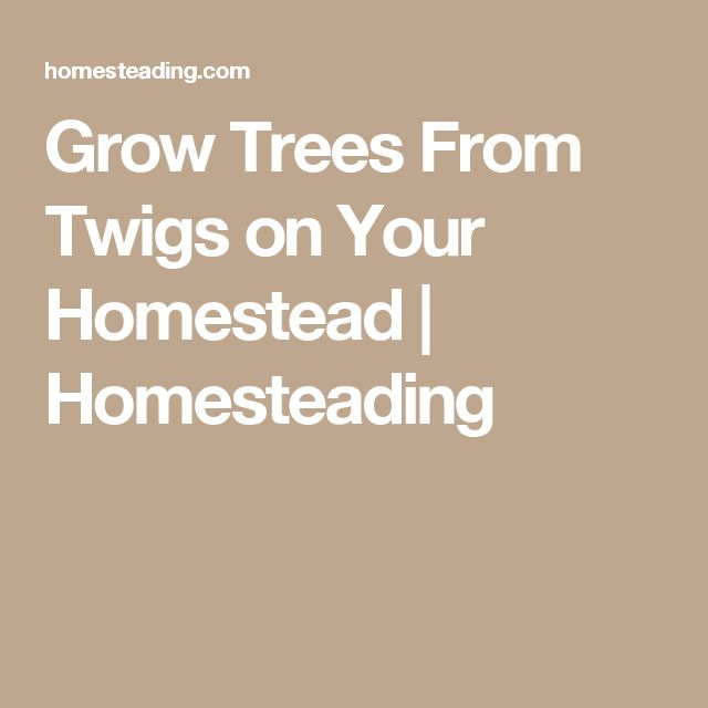 Grow Trees From Twigs on Your Homestead | Homesteading