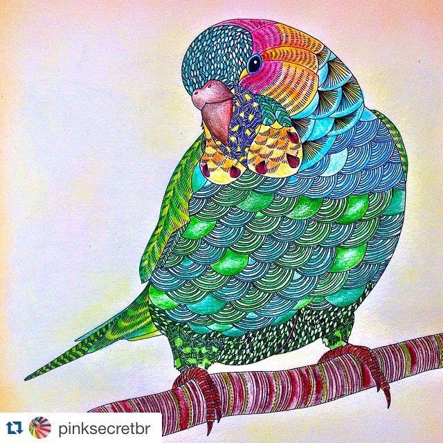 Partilhado Com Instagrab Colourful BirdsAdult ColoringColoring Books BudgiesAnimal KingdomLetteringMixed