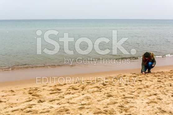 Young woman while collecting shells on the beach royalty-free stock photo