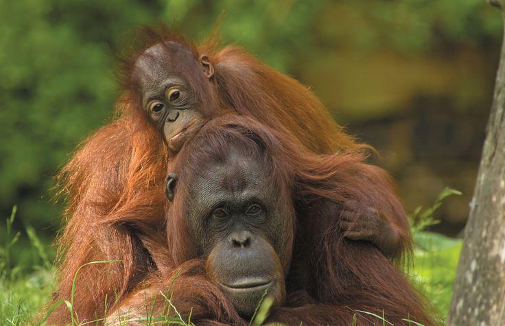 Jungles and Orangutans   Virgin Holidays