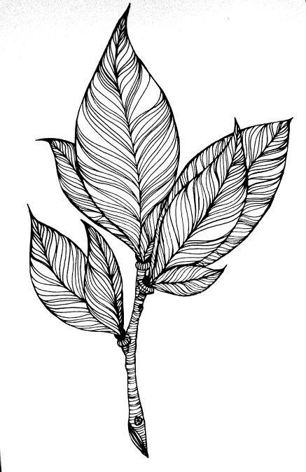 facebook.com/annasartgallery @szabo_anna_k #art #drawing #linework #blackandwhite #plant