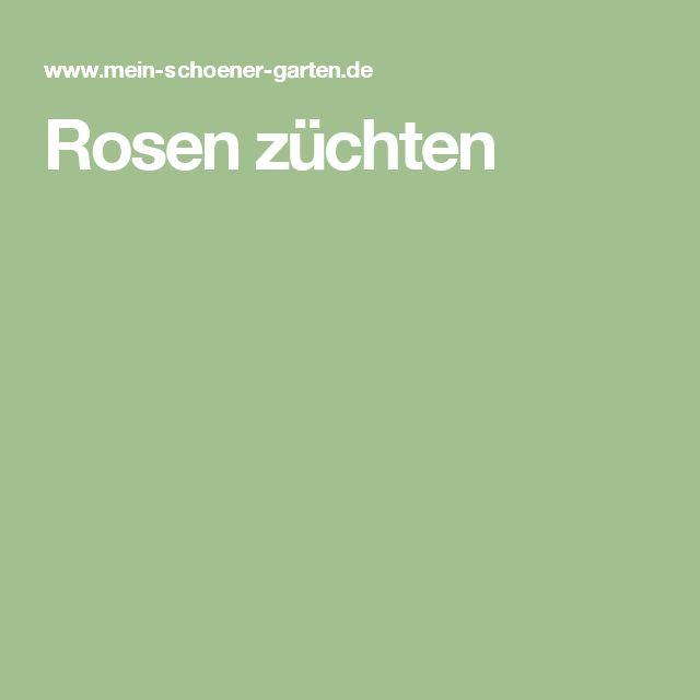 25 best ideas about rosen z chten on pinterest pflanzen. Black Bedroom Furniture Sets. Home Design Ideas