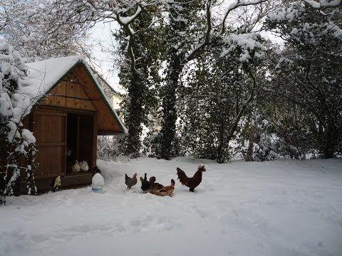 ▶ Pallet Wood Hen House Chicken Coop for less $. Poulailler en palettes. Gallinero - paletas de madera - YouTube