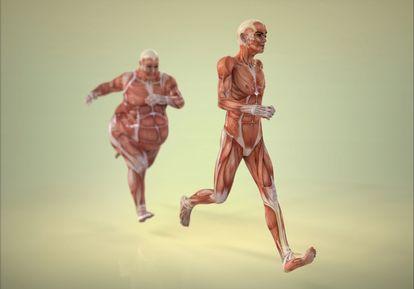 Salud y Nutrición Para Todos: El Origen del Indice de Masa Corporal