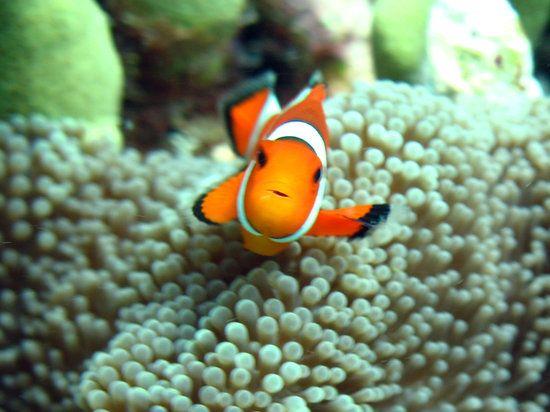 Palawan- Scuba diving and Island hopping- Puerto princesa and el nido and Coron