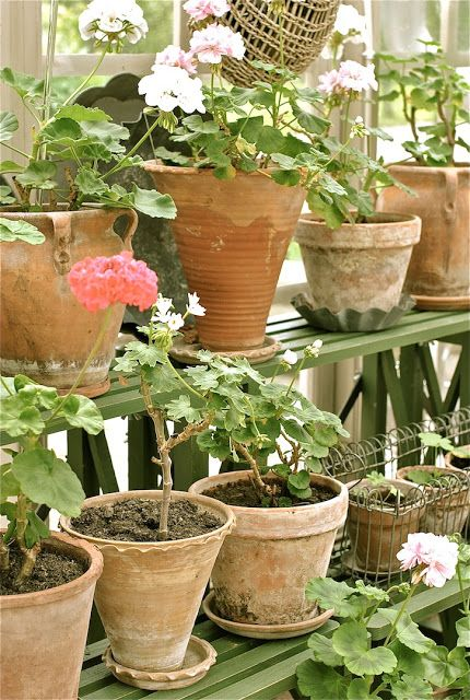 478 best urns metal planters and garden pots images on pinterest i love the smell of geraniums garden potsbalcony workwithnaturefo