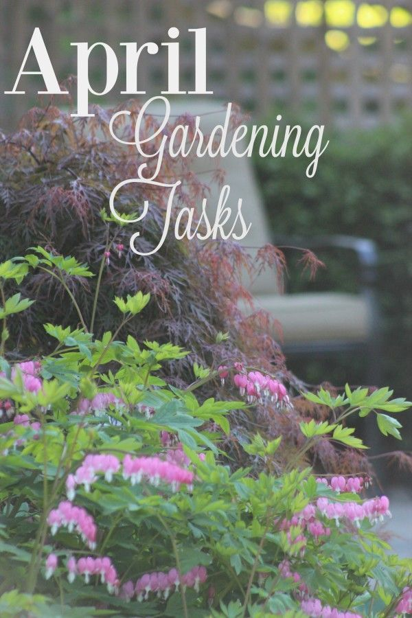 93 best gardening outdoor plants images on pinterest for Easy to keep garden plants