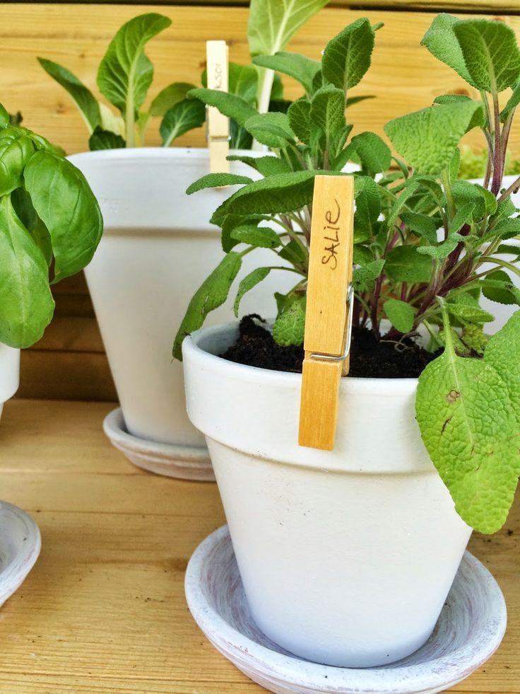 DIY the kitchen garden