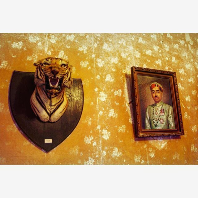 #memories #india #tiger #portrait #colors #goodTimes #travels #trip #adventure