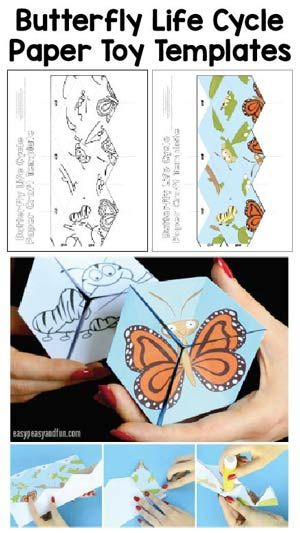 Butterfly Life Cycle Craft Template