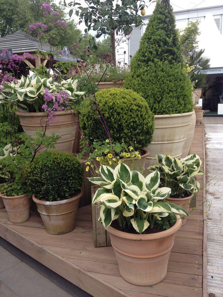pots pots and pots - Garden Ideas Pots