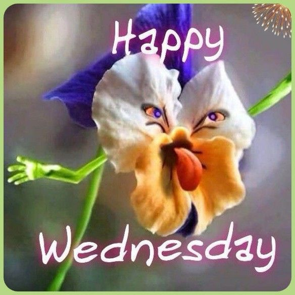 Pin By Nina Addis On Wednesday Wednesday Memes Funny Wednesday Memes Happy Wednesday