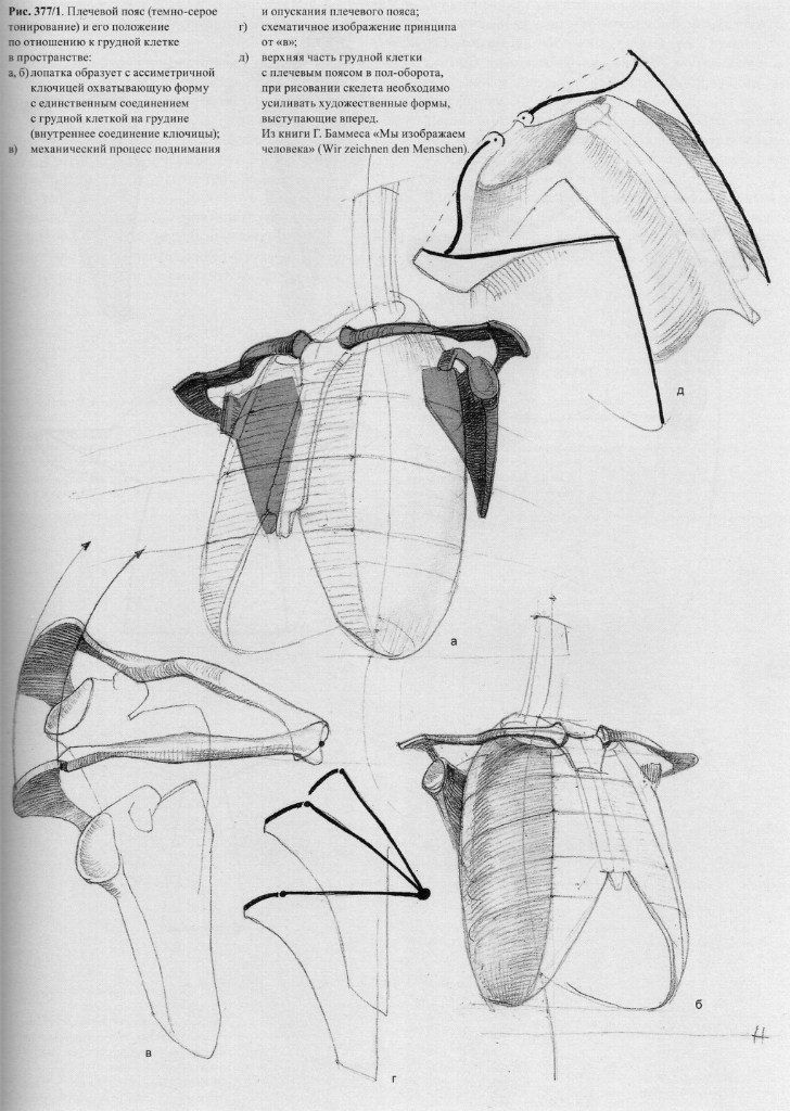 134 best Gottfried Bammes images on Pinterest | Anatomy reference ...