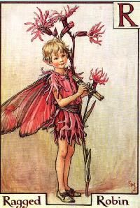 Cicely Mary Barker, Ragged Robin