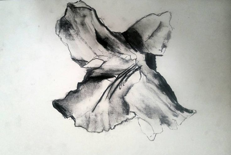 #art #drawing #charcoal #paper #flower