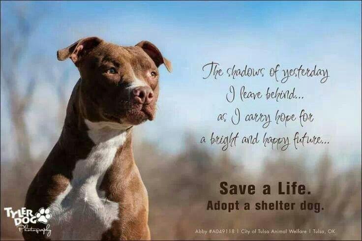 Save A Life Adopt A Shelter Dog Shelter Dogs Animal Advocacy Adoption