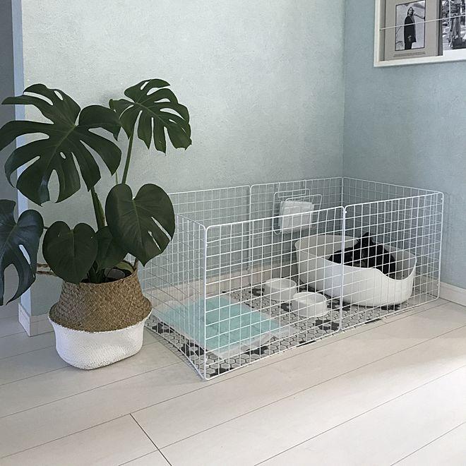 部屋全体 ダイソー セリア ペットゲージ 犬と暮らす などのインテリア実例 2018 02 19 09 21 27 Roomclip ルームクリップ 犬の部屋 インテリア インテリア 家具