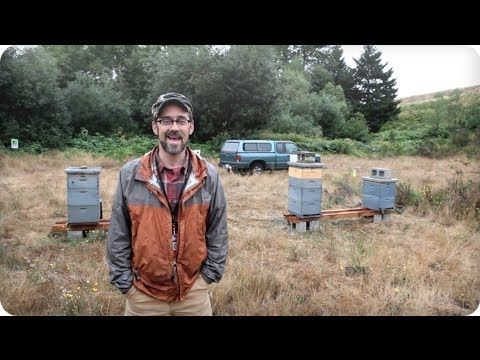 Check out our new video about the Flight Path Project @ SeaTac Airport feat. http://youtu.be/jIGDmIgYG6I  #urbanbeekeeping #yaybees