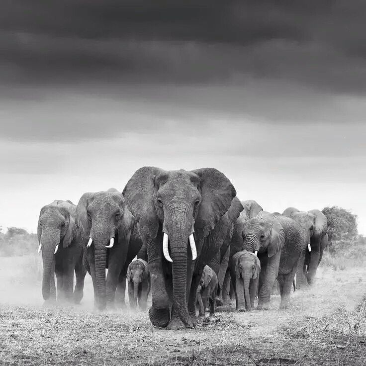 Great photography of a herd of elephants