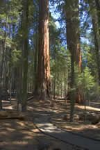 Trail of A Hundred Giants, Sequoia National Monument, CA....100 giant sequoias on a half mile trail. The most beautiful walk we've ever taken!