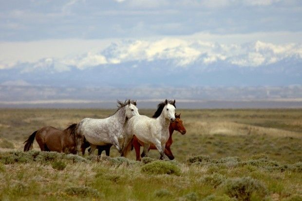 Friends of Animals - Friends of Animals' comments on potential wild horse gather on the Pryor Mountain Range