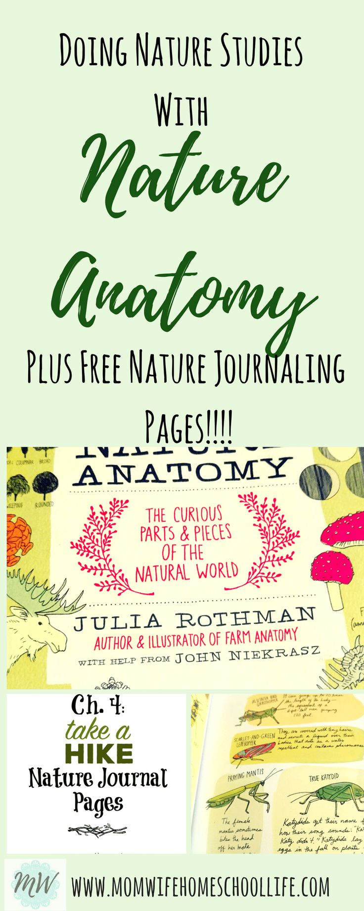 Nature Study with Nature Anatomy ⋆ Mom Wife Homeschool Life, nature study, nature anatomy, nature journaling, journal, charlotte mason
